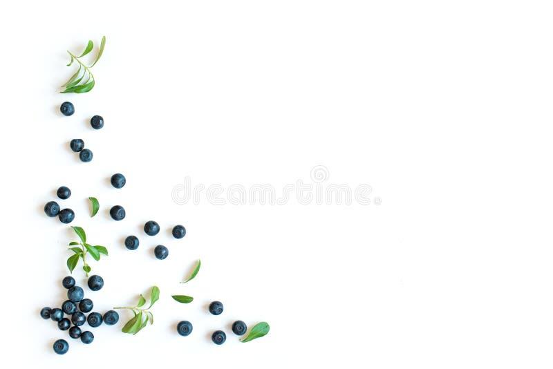 Frische Blaubeeren und Blätter stockbild