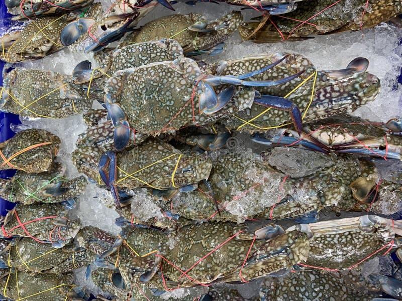 frische blaue Krabbe auf Regal im Markt lizenzfreies stockfoto