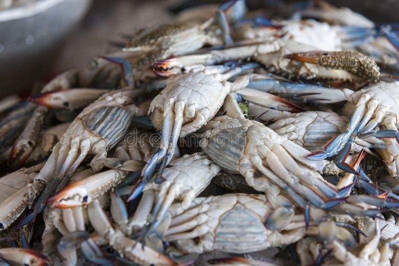 Frische blaue Krabben auf der Fischmarktanzeige stockfotografie