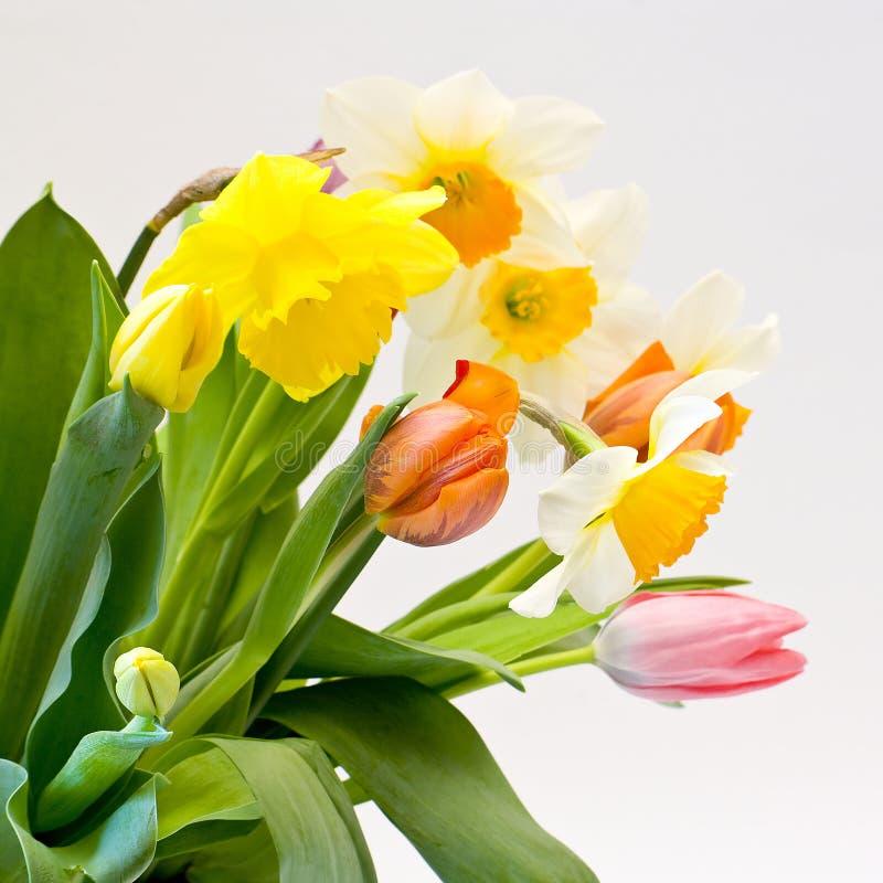 Download Frische Blumen stockfoto. Bild von flora, klassisch, blumenhändler - 9092146
