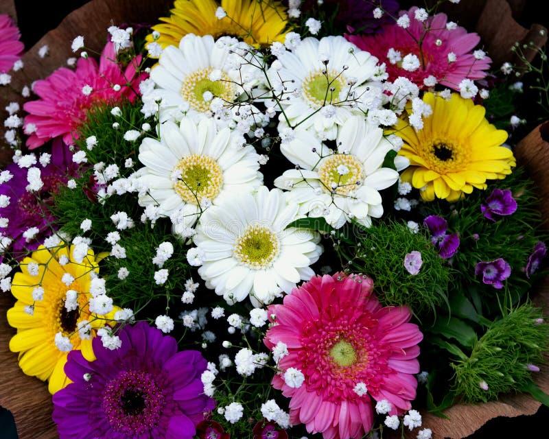 Frische Blumen bunt stockbilder