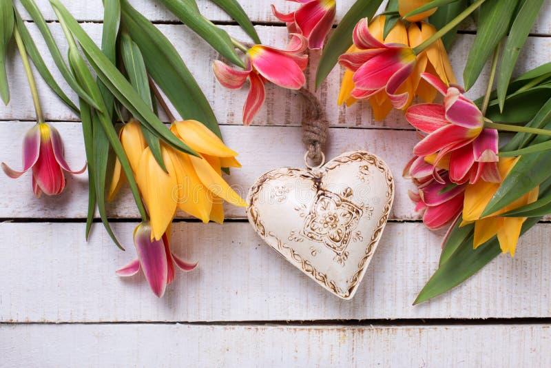 Frische bunte rote und gelbe Tulpen und weißes dekoratives Herz lizenzfreies stockfoto