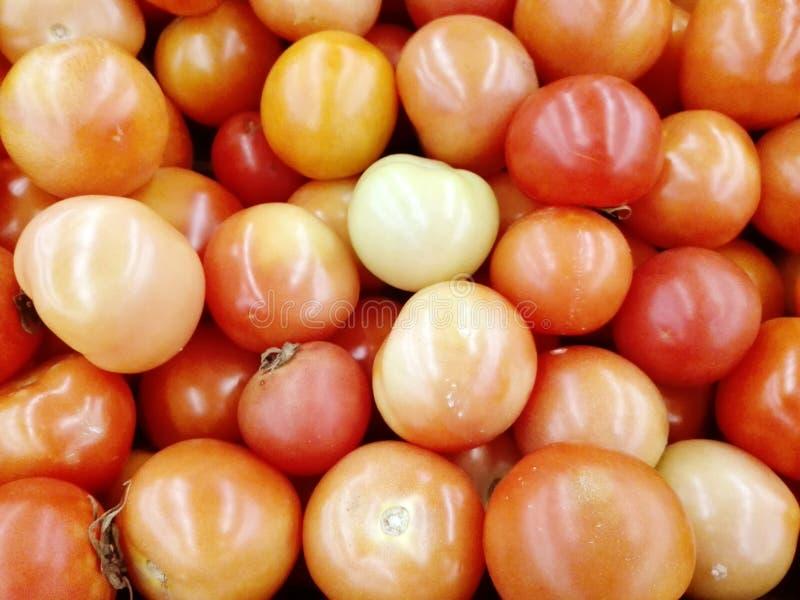 Frische bunte Tomaten stockbilder