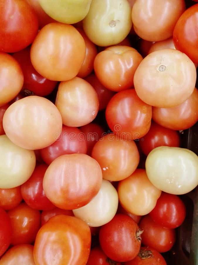 Frische bunte Tomaten lizenzfreies stockbild