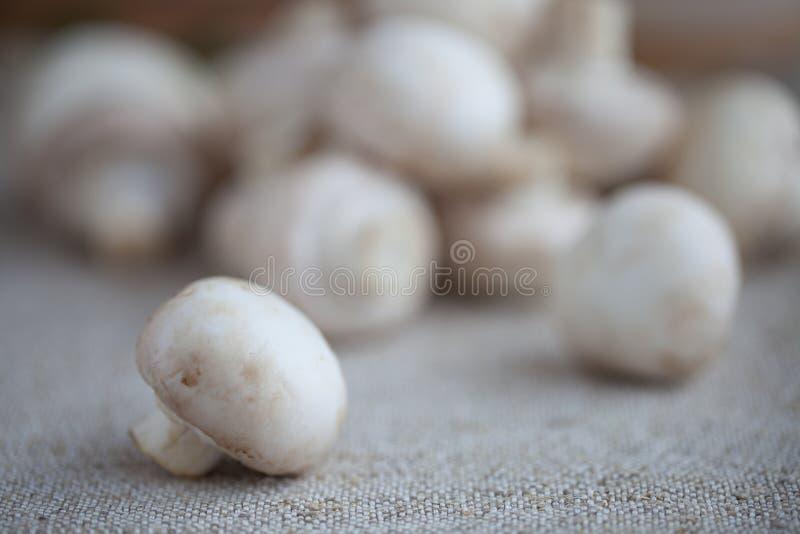 Frische Champignons stockfotografie