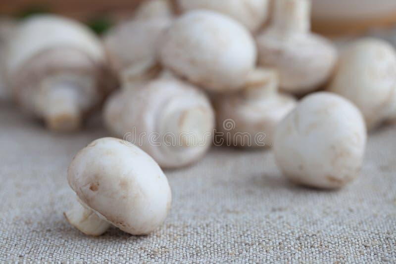 Frische Champignons lizenzfreies stockbild