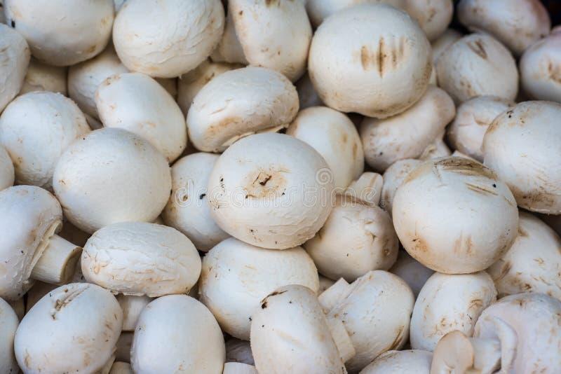 Frische Champignons im Markt stockfoto