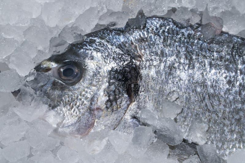 Frische Dorado-Fische im Eis auf dem Ladenregal stockfoto