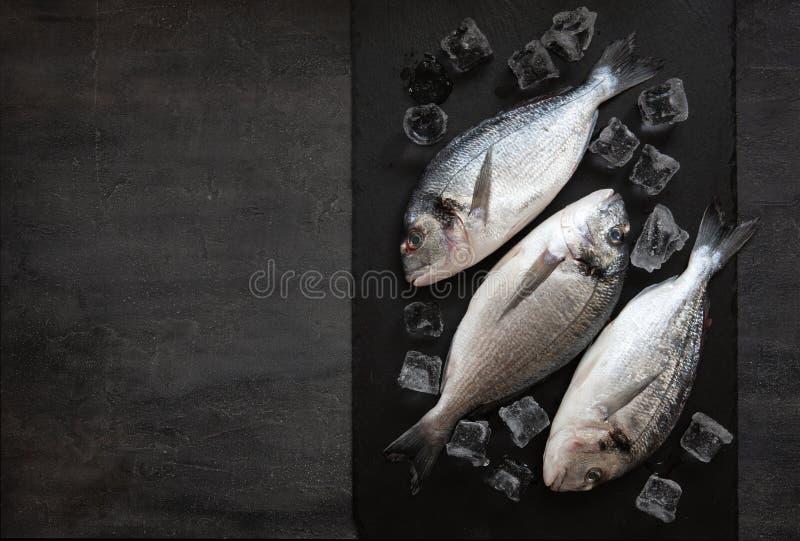 Frische dorado Fische mit Eis auf Steinschneidebrett auf dunkler Tabelle Draufsicht, Kopienraum stockfotografie