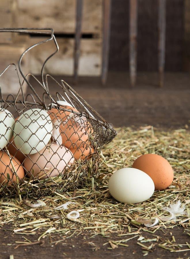 Frische Eier des Bauernhofes stockbild