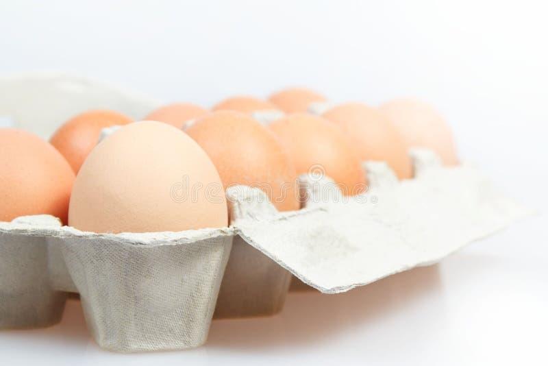 Frische Eier im Kartonkasten lizenzfreies stockfoto