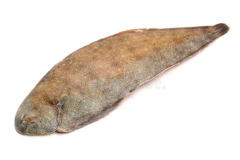 Frische einzige Fische der ganzen Paare stockfotografie