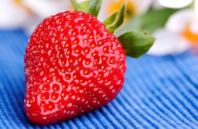 Download Frische Erdbeere stockbild. Bild von organisch, frech - 9099293