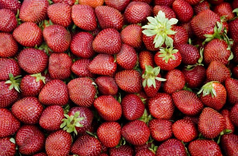 Frische Erdbeeren stockfoto