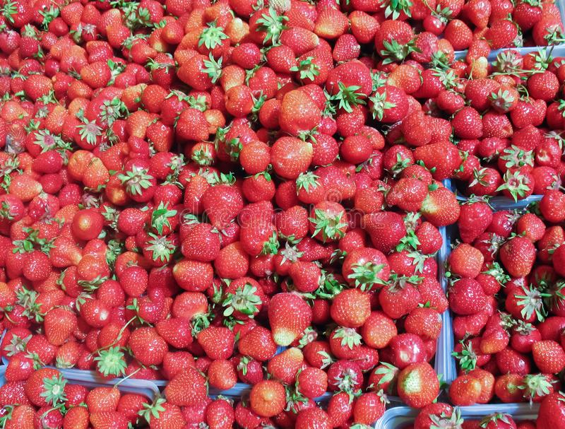 Frische Erdbeeren auf Basar, Landwirtmarkt stockbild