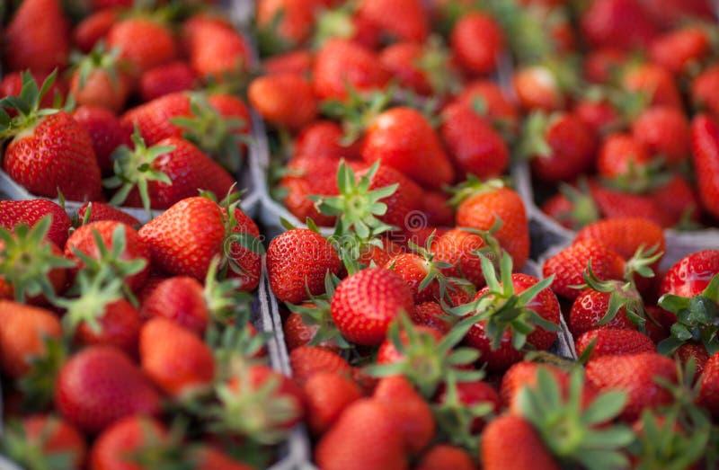 Frische Erdbeeren auf Markt lizenzfreies stockfoto