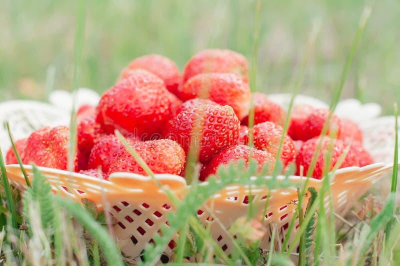 Frische Erdbeeren in einem Weidenkorb auf grünem Gras stockbilder
