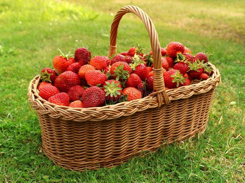 Frische Erdbeeren im Korb lizenzfreie stockfotos
