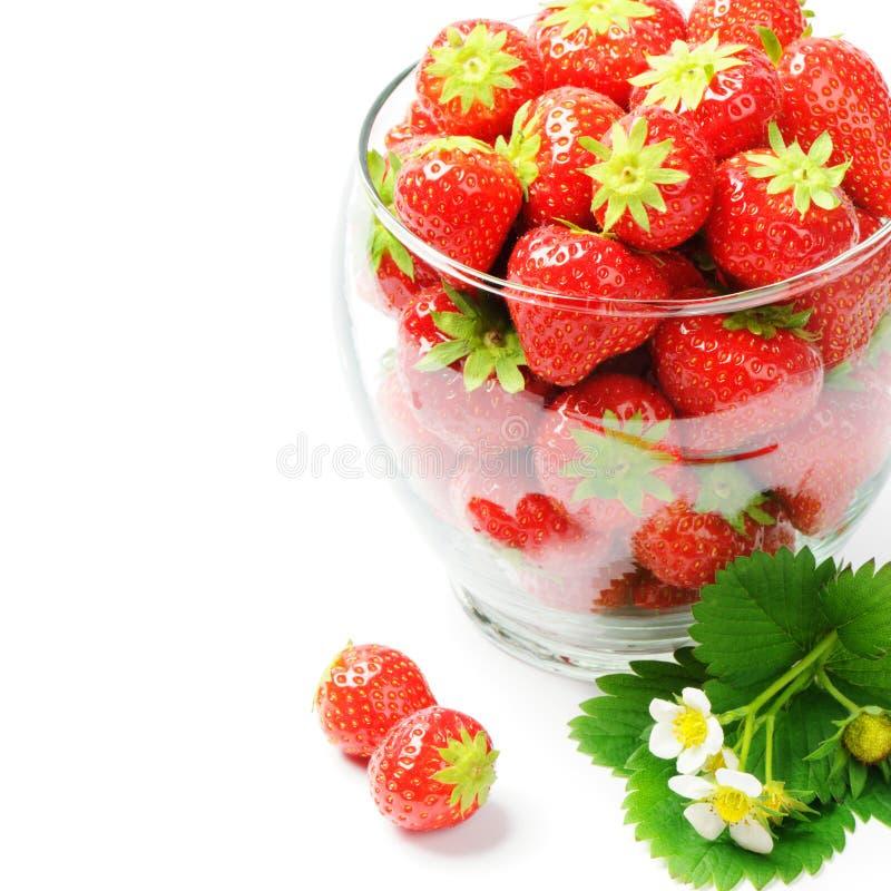 Frische Erdbeeren lokalisiert über Weiß stockfoto