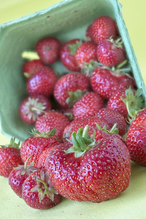 Frische Erdbeeren von einem strawberrz Bauernhof lizenzfreies stockfoto