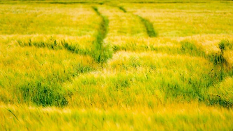 Frische Ernte mit Bahnen auf ihr lizenzfreie stockfotografie