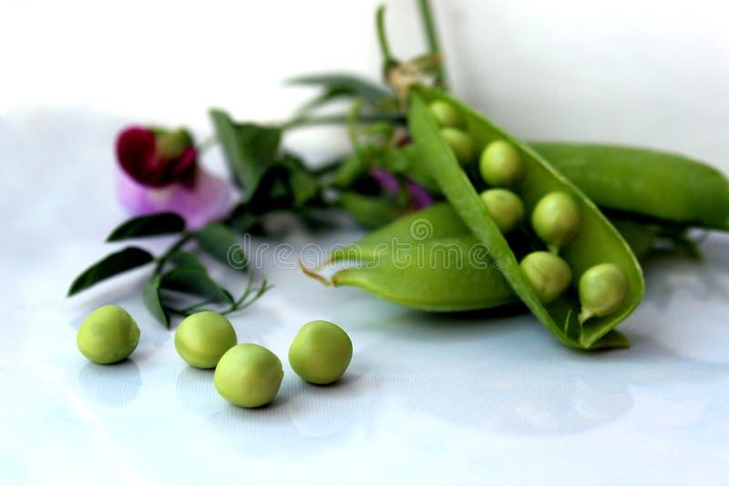 Frische Ernte von grünen Erbsen mit einer Blume lizenzfreie stockbilder