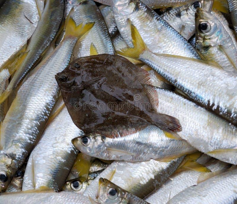Frische Fische stockfotografie