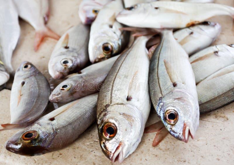 Frische Fische auf dem Zähler stockfotos