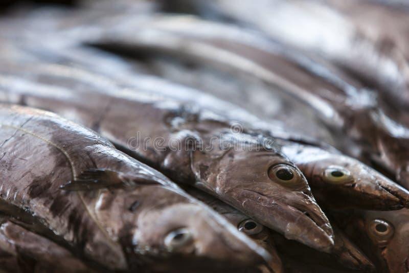 Frische Fische auf der Marktanzeige lizenzfreie stockfotografie