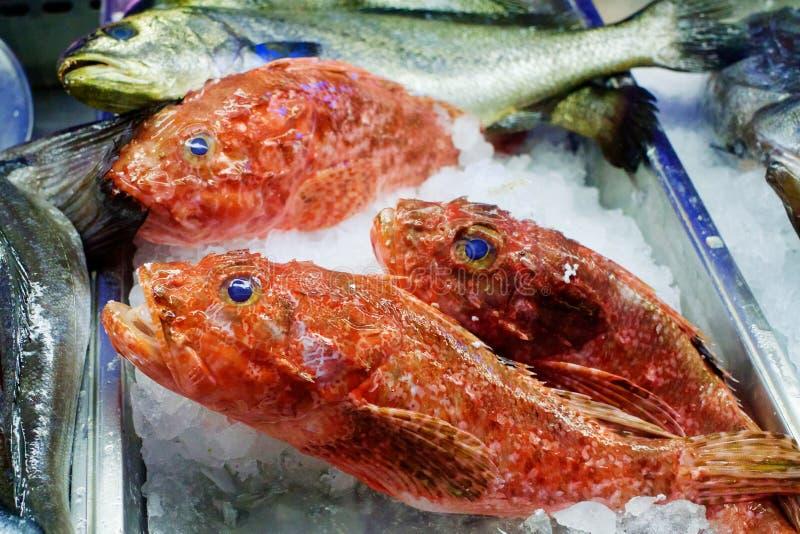 Frische Fische auf Eis am Meeresfrüchterestaurant in Griechenland lizenzfreie stockbilder