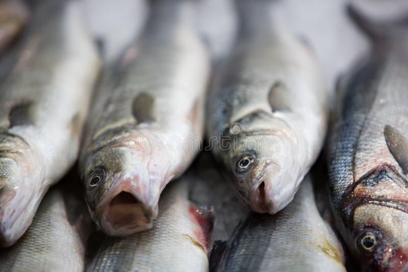 Frische Fische auf fishmarket lizenzfreies stockbild