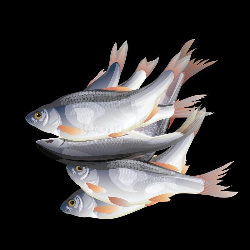 Frische Fische des Haufens lizenzfreie abbildung