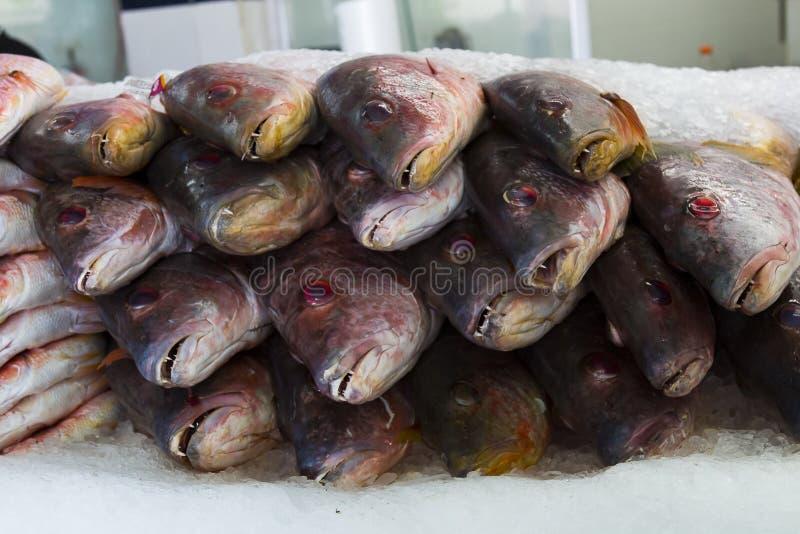 Frische Fische für Verkauf in einem Markt in Tijuana, Mexiko stockfotografie