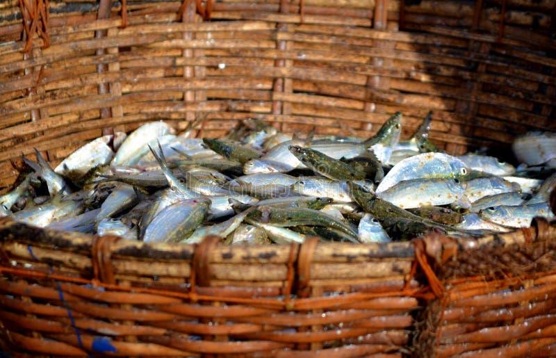 Frische Fische für Verkauf in Negombo, Sri Lanka stockfotos