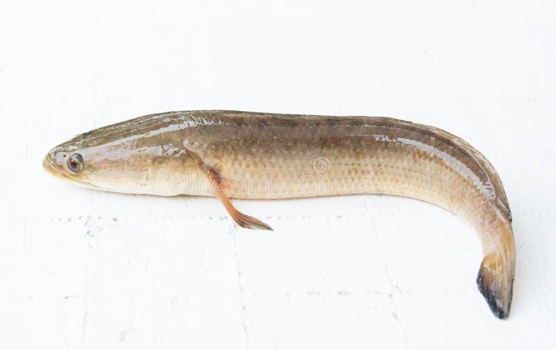 Frische Fische, Frischwasserfische, natürliche Nahrungsmittel lizenzfreie stockfotografie