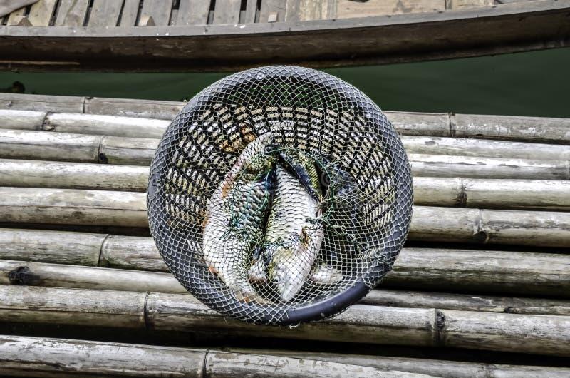 Frische Fische im Korb bei Kanchanaburi, Thailand stockbild