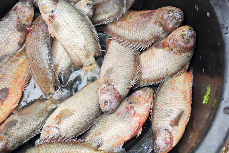 Frische Fische - im Markt stockbild