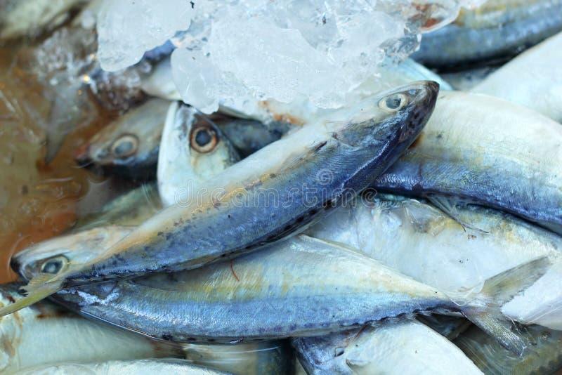 Frische Fische - im Markt lizenzfreie stockfotografie