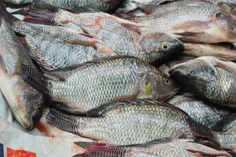 Frische Fische im Markt lizenzfreies stockfoto