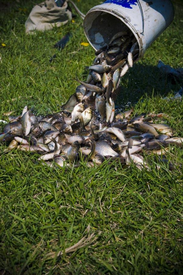 Frische Fische von der Wanne lizenzfreie stockfotografie