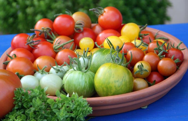 Frische Früchte der Tomate stockfotos