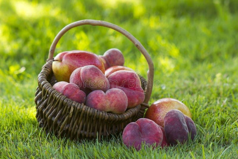 Frische Früchte in einem Korb stockfoto