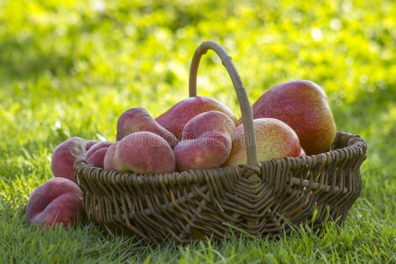 Frische Früchte in einem Korb lizenzfreie stockbilder