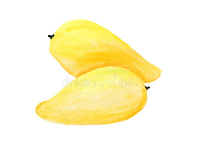 Frische Frucht gemalt im Aquarell stockfoto