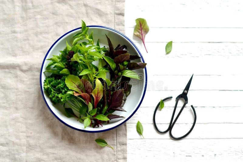 Frische Gartenkräuter in einer Weinleseplatte lizenzfreies stockfoto