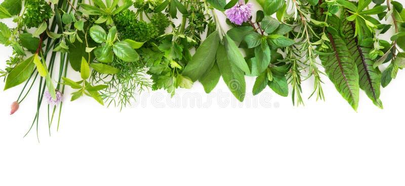 Frische Gartenkräuter lokalisiert auf weißem Hintergrund stockbild