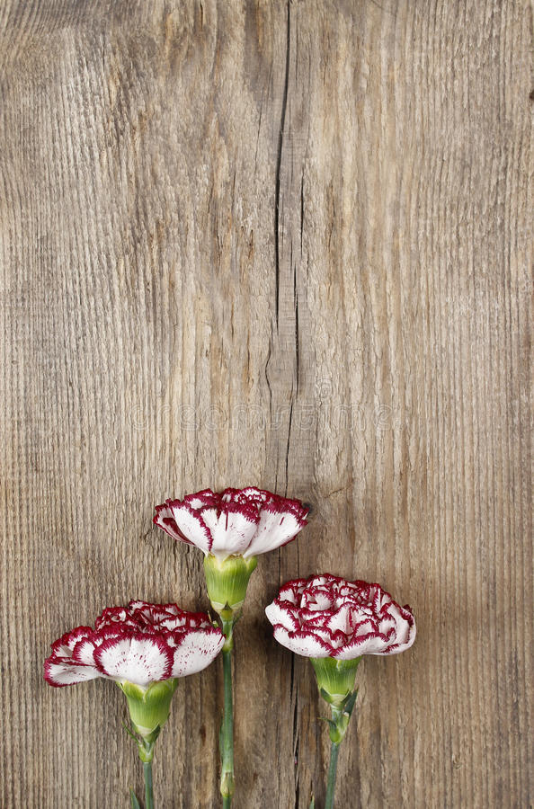 Frische Gartennelkenblumen auf hölzernem Hintergrund lizenzfreies stockbild