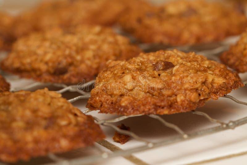Frische gebackene Hafermehl-Schokolade Chip Cookie Rack lizenzfreies stockfoto