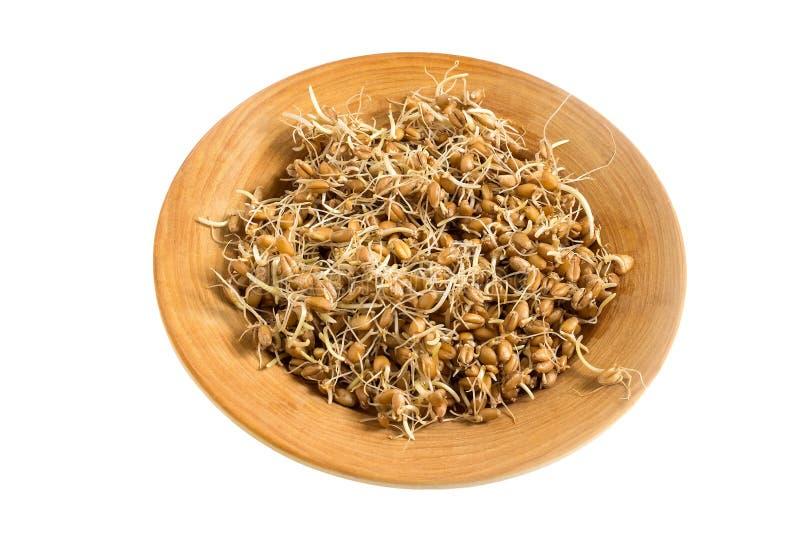 Frische gekeimte Weizensamen auf Platte auf weißem Hintergrund stockbilder