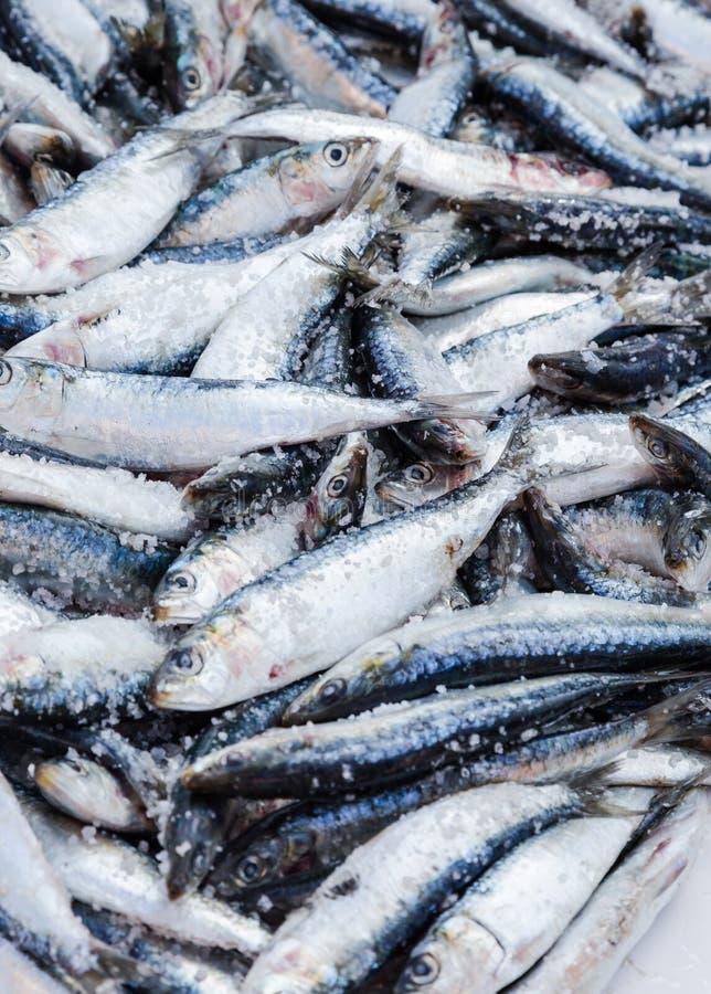 Frische gesalzene Sardinen angezeigt auf Fischmarkt in Essaouira, MOR stockbilder
